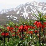 iran nomad tour- kuhrang flower field- Artin travel