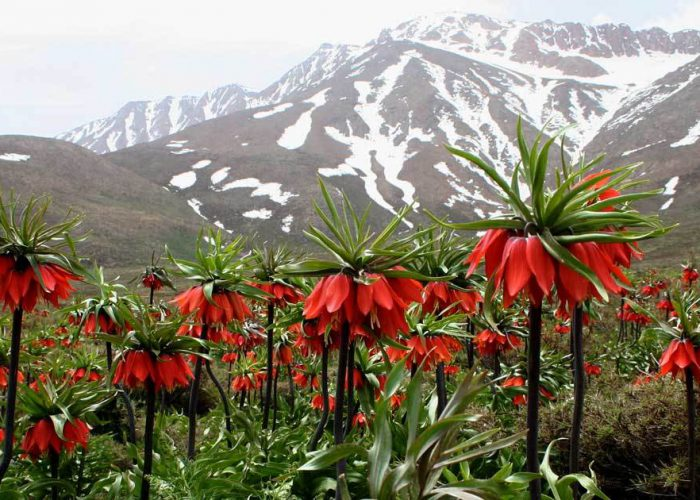 iran nomad tour- kuhrang flower field- Artin travel