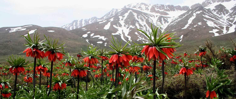 Iran-Nomad-Kouhrang- zagrous