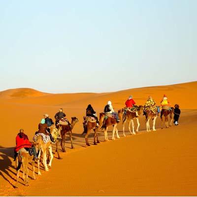 Desert animals in Kavir-Mesr