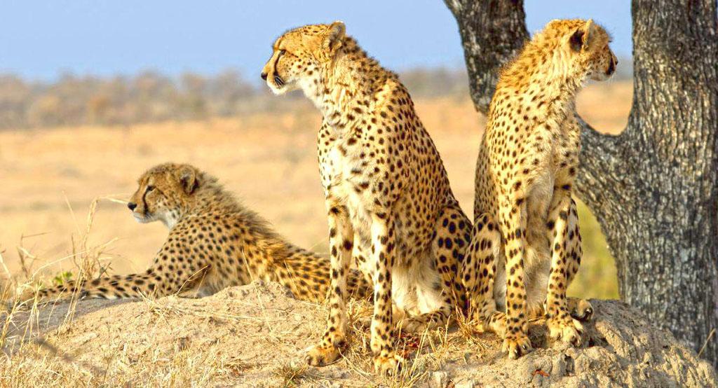 Iran desert animals