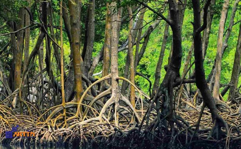 Hara mangrove forest Iran Qeshm island attraction