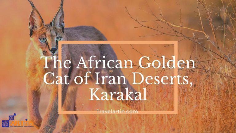Caracal in Iran deserts deadly animal Karakal travelartin.com