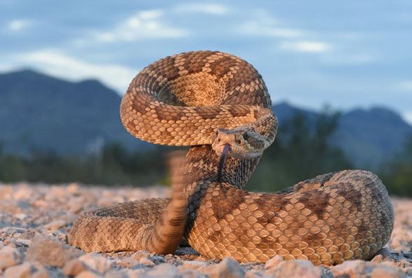 What you should most expect snakes