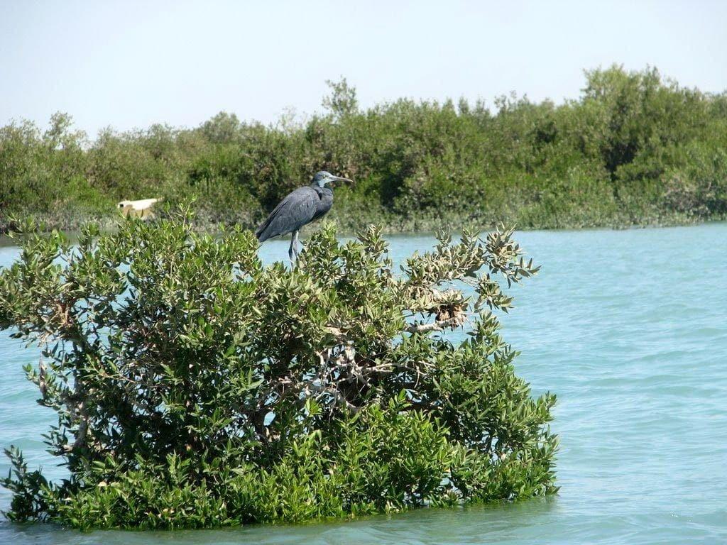 Harra- forests- qeshm island- travelartin.com
