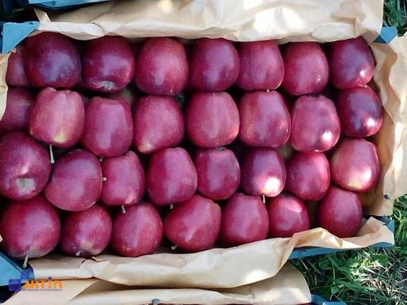Fresh apple what to buy in Tehran travelartin.com