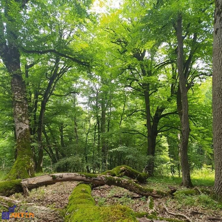 Golestan national park in Iran capsian hyrcanian forest