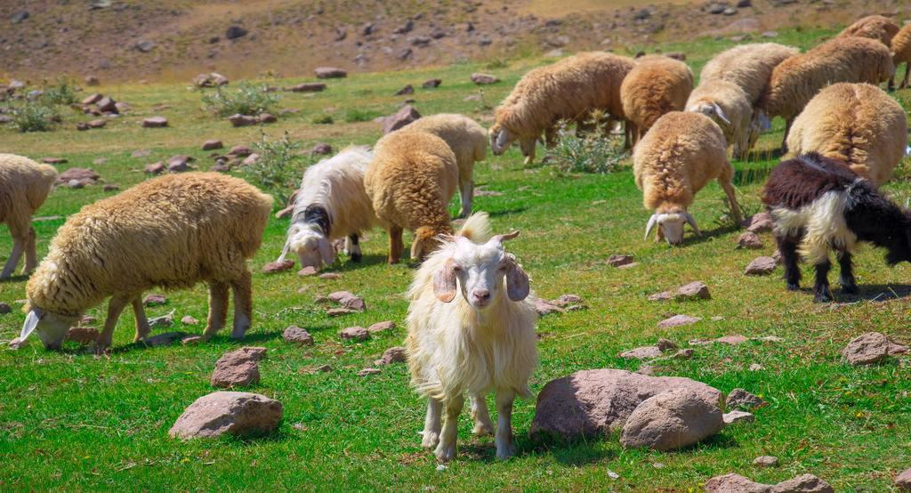 Iran summer destination travelartin.com